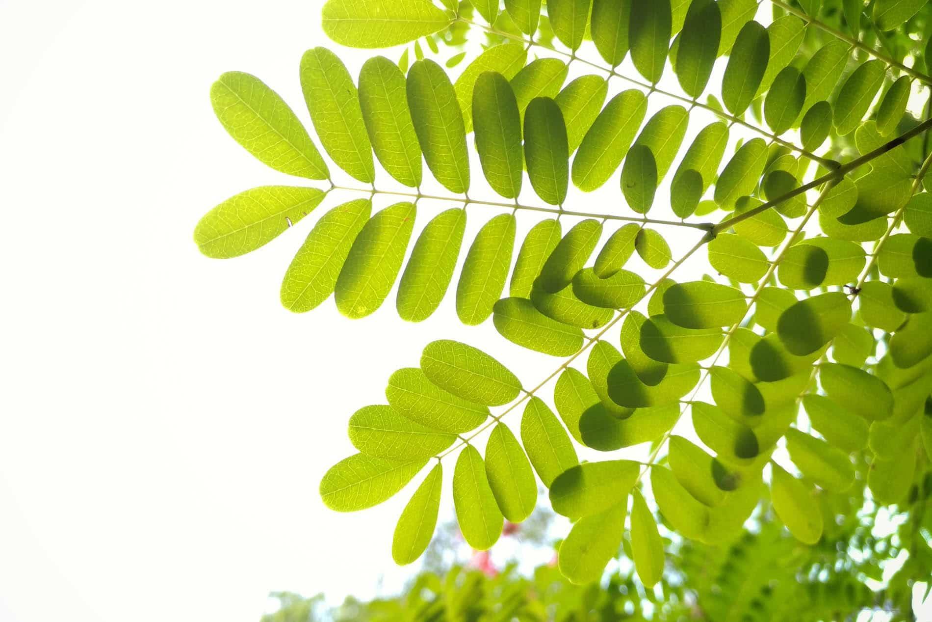 Bomen planten, hoe doe ik dat? Tien tips